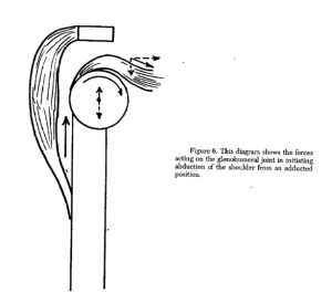 Rotator Cuff distraction in swimming shoulder pain