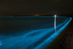 swim Bioluminescence in waves in the Gippsland Lakes, Victoria, Australia.