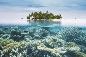 swim Maldives halfwater