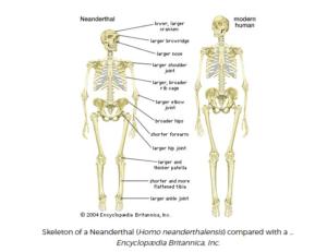 neanderthal-vs-homosapien