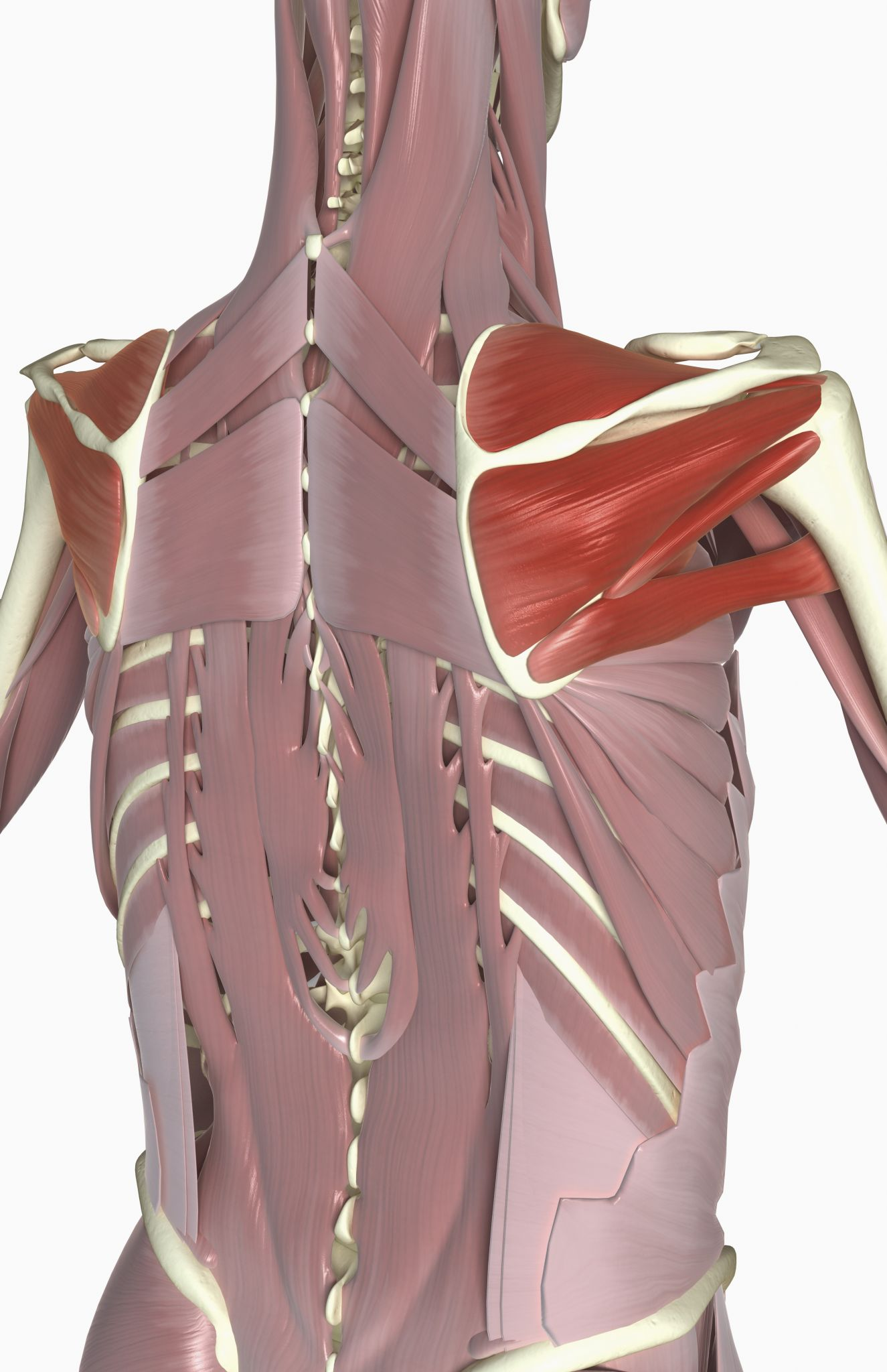 3 Things Causing Your Swimming Shoulder Pain Physical Therapy